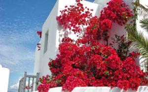 Haus Blumen Himmel
